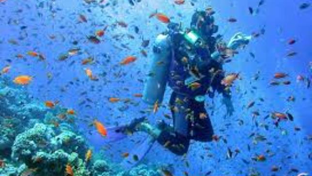 Sailing and Diving into the Blue Amalfi Coast - Half Board